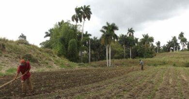 Convocados productores de Jaruco a ser eficientes en la entrega de productos agropecuarios al pueblo