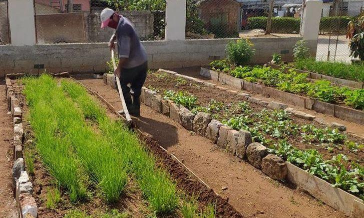 Escuelas de Jaruco potencian cultivos de ciclo corto