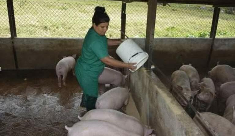 María Esther González, es una jaruqueña que se siente orgullosa por ser la única mujer de Mayabeque que se dedica a la cría de cerdos. Foto Yainely Guerra