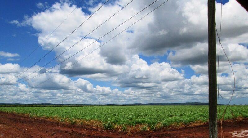 Campos de caña de Jaruco. Foto Radio Jaruco