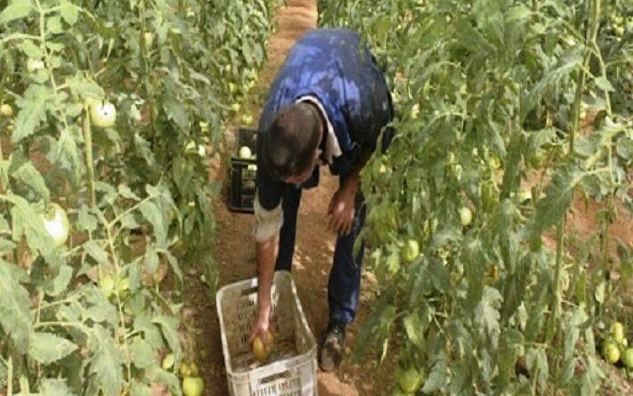 Implementan medidas para incrementar la producción de alimentos. Foto Radio Mayabeque