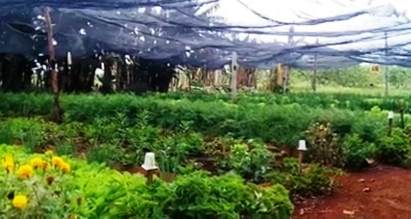 Jaruco cuenta con una finca de semilla registrada. Imagen captura del video
