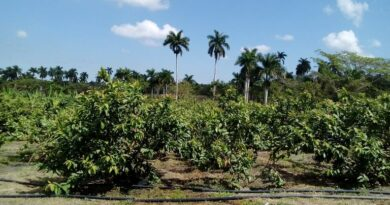 Agricultura en Jaruco, Foto Anelis Díaz