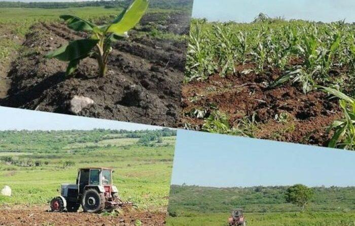 A favor del desarrollo agrícola. Foto : Nileyan Reyes Miranda