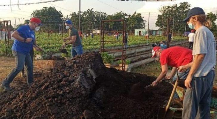 Desde bien temprano el presidente junto a un grupo de jóvenes participa en trabajo voluntario. Foto: Cubadebate