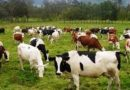 The National Livestock Counting Exercise will begin on June 10